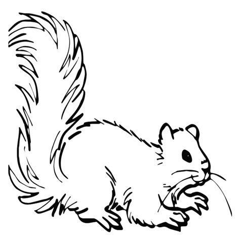 immagini di animali divertenti da colorare immagini degli animali da colorare avec disegni di animali