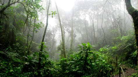 rainforest  foggy day  stock photo
