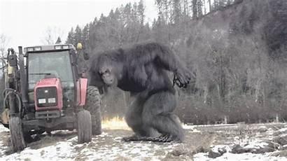 Bigfoot Oregon Random Hoax Gifs Syfy Sightings