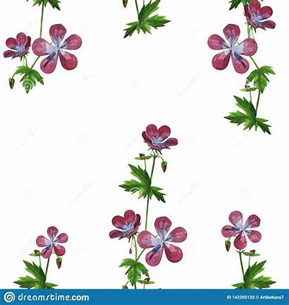 Texture Watercolor Pattern Seamless Dandelions Wildflowers Spring