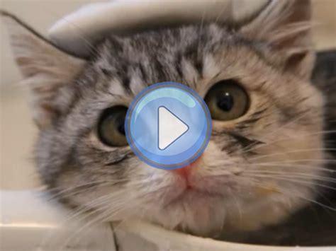 Vidéo d'un chaton qui prend son premier bain dans une ...