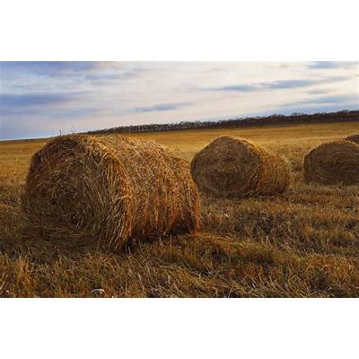 Hay Field Free Stock Photo - Public Domain Pictures