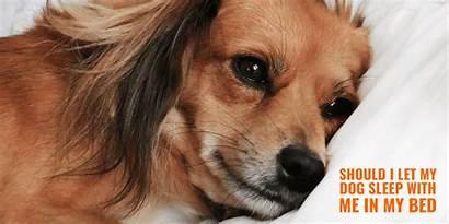 Dog Sleep Bed Let Should Sleeping Letting