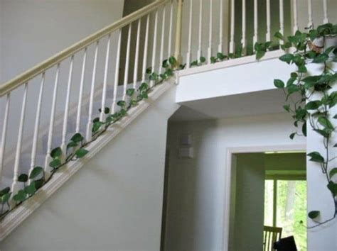 Eye Catching Indoor Climbing Plants