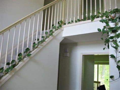 Eye Catching Indoor Climbing Plants  Wearefound Home Design