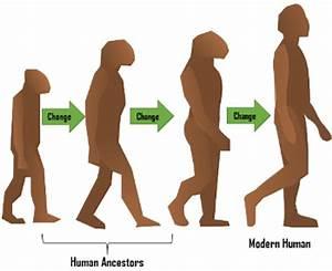 Evolution Of Man Timeline Chart   www.pixshark.com ...