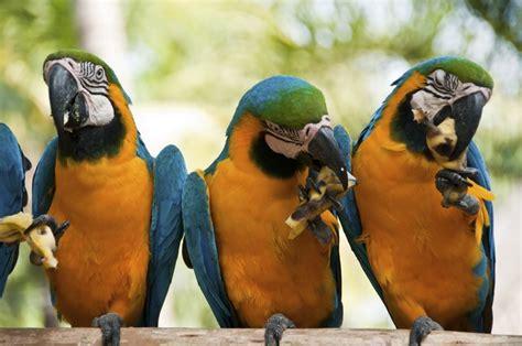 kinds  fruit  parrots  macaws