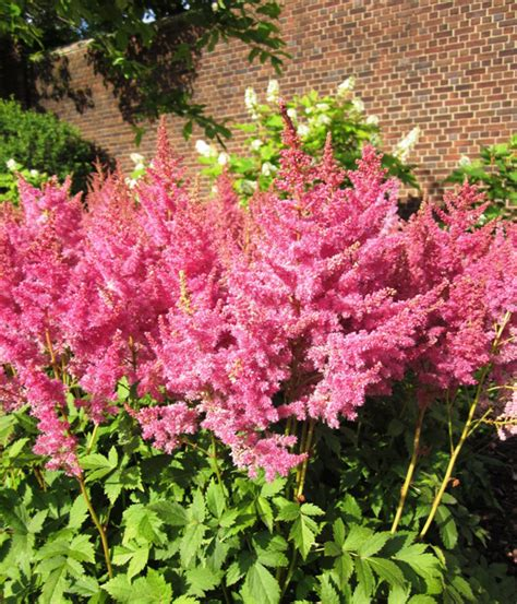 Top Shade Loving Plants Outdoorthemecom