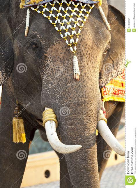 dress  elephant stock photography image