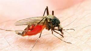 Tigermücke Stich Symptome : zika virus neue erkenntnisse ~ Frokenaadalensverden.com Haus und Dekorationen