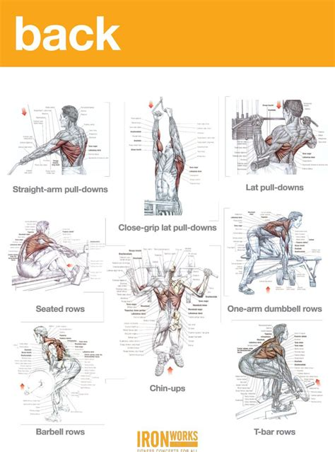 However, the muscle names often reflect something about their action, their shape, or their locations. BACK, TRAPS AND BICEPS WORKOUT | Biceps workout, Traps ...