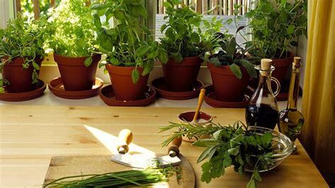 herbe aromatique cuisine les erreurs à éviter dans la culture des plantes aromatiques