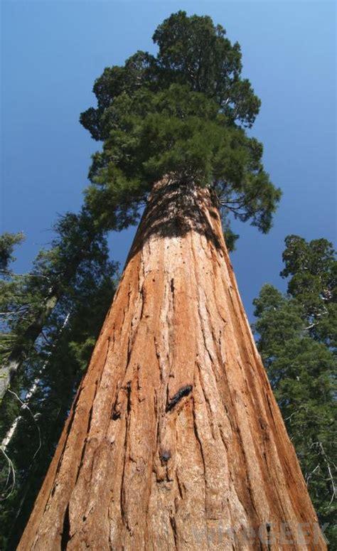 advantages  redwood siding  pictures