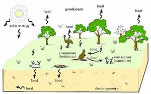 Agriculture and the environment - Ecosystems