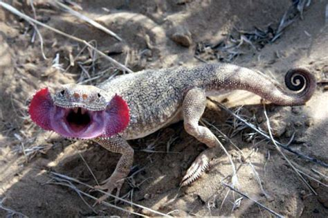 Health: 7 Types of Lizards unique in the World