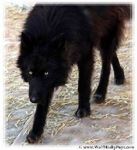 78+ images about OUR FAVORITE PICS on Pinterest   Wolves ...
