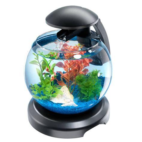 aquarium ideal pour combattant et 224 part chat le betta splendens ou plus commun 233 ment appel 233 combattant catdreams