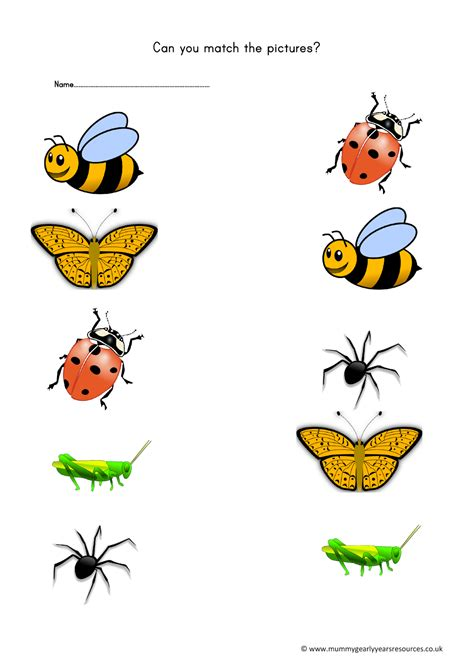 mini beasts matching pictures worksheet mummy  early