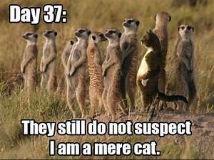 tag memes meerkat communications