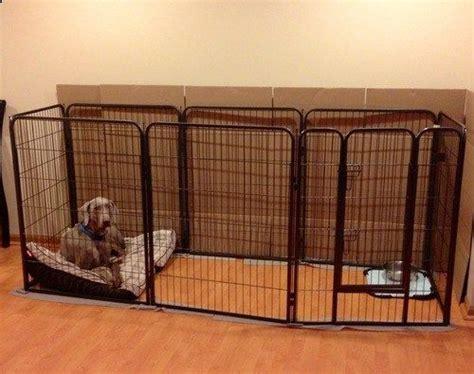 ideas  dog playpen  pinterest puppy