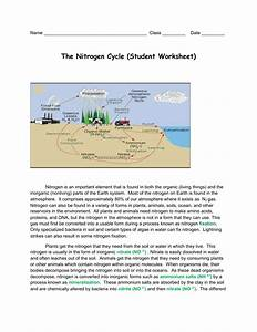 32 Nitrogen Cycle Worksheet Answer Key