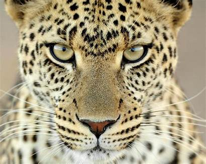 Animals Wild Wallpapers Desktop Latest Animal Background