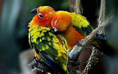 Birds Desktop Wallpapers Backgrounds Bird Parrot Parrots