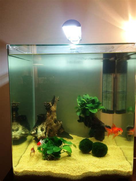 combien de poisson dans un aquarium aquariophilie r 233 cit des erreurs d un d 233 butant