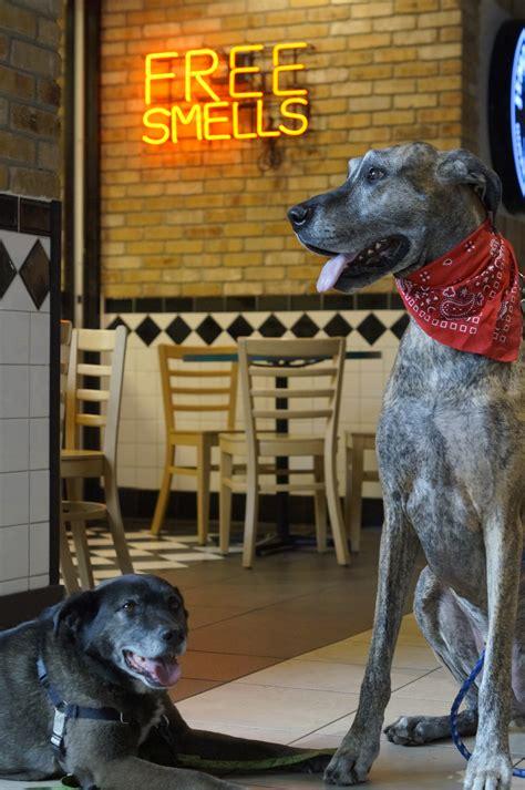 calhoun dog square friendly indoors epic dogs shopping center