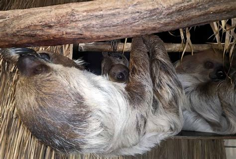 zoo heidelberg startseite