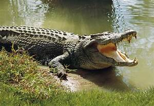 The 5 Main Characteristics of Reptiles