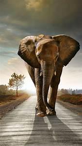 Wallpaper, Elephant, Sunset, Road, Nature, Animals, 4501