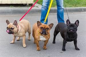 Hundebekleidung Französische Bulldogge : franz sische bulldogge hunde ~ Frokenaadalensverden.com Haus und Dekorationen