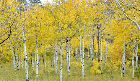 Southwest Colorado's Fall Colors Are Nearing Their Peak