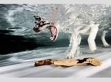 Hunde unter Wasser – Fotografie Issn' Rüde! Hunde News