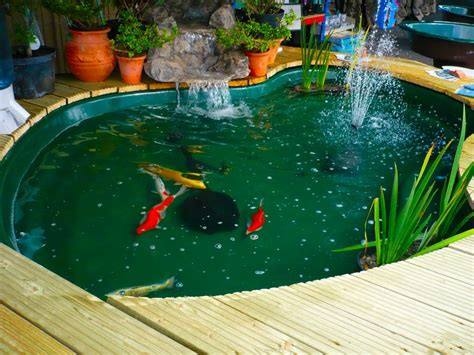 budidaya ikan koi kolam sekaligus sebagai tema desain