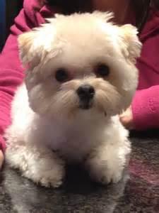 Cutest Dog in World