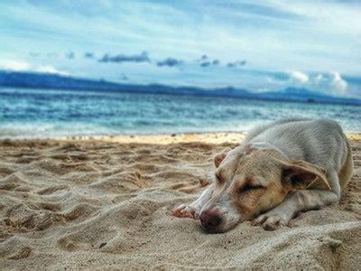 Urlaub Mit Hunde Deutschland
