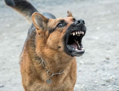 positive reinforcement dog trainer offering puppy training