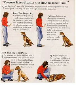 how to stop a dog eating poop basic commands for dog With dog training commands