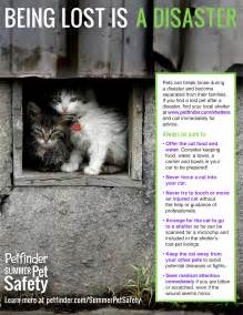 how to find lost cat infographic helping lost cats petfinder