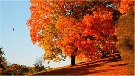Fall Desktop Backgrounds by Nature Wallpaper Pack 2 1366x768