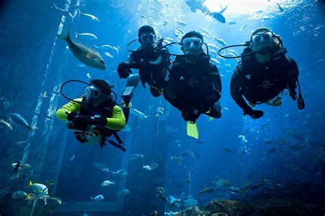 Underwater Dive - best things to do at atlantis the palm dubai a luxurious