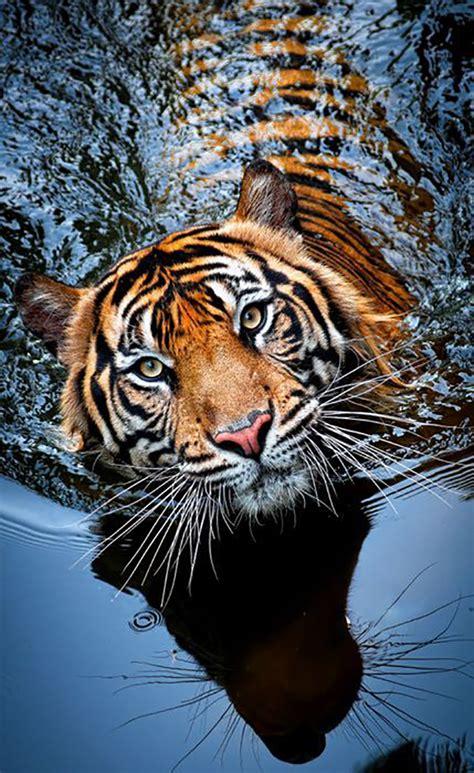 Top 10 Photos Of Big Cats Top Inspired