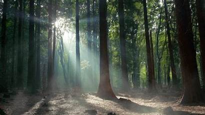 Giphy Morning Cinemagraph Stills Forest Aesthetic Nature