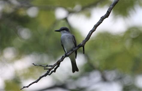 A Homeowners Guide To Common Backyard Birds In New York