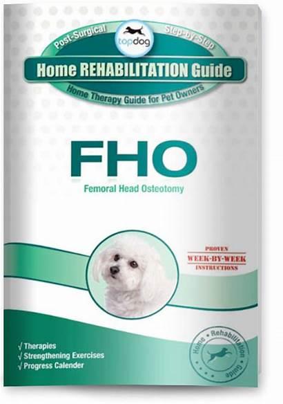 Fho Femoral Head Osteotomy Rehab Surgery Dogs