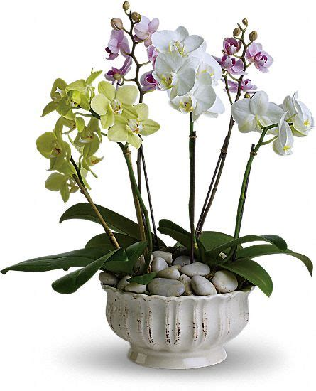 regal orchids plants wedding floral arrangements