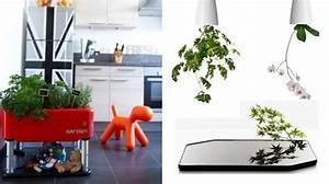 Plante Interieur Haute : dr ~ Teatrodelosmanantiales.com Idées de Décoration