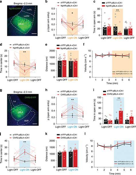 PBLA-vCA1 inputs promote approach behaviour and exert ...